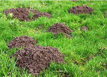 Ware Organic Lawn Care
